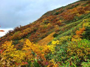 八海山紅葉